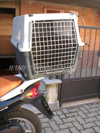 Amici pelosi a spasso in scooter for Trasportino cane scooter